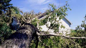 Homeowners insurance and tree damage