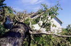 A home after a tree has fallen onto the roof.