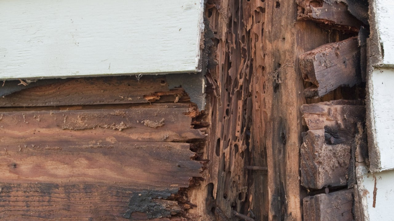 Close-up of exposed wood outside of a house and termite damage.