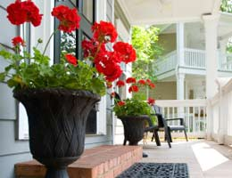Potted flower plants by the door