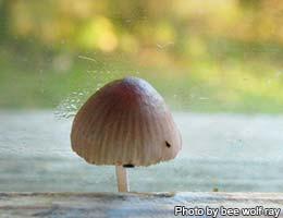 The mushroom windows