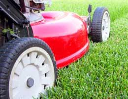 Keep grass longer