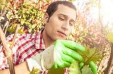 Male landscape architect inspecting plant   Leonardo Patrizi/E+/GettyImages