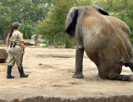 Zoologist © Bonita R. Cheshier/Shutterstock.com