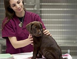 Veterinarian © aspen rock/Shutterstock.com