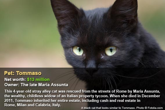 Pet: Tommaso