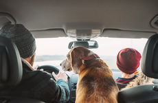 family driving in car with dog