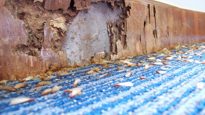 Should you buy a home with termite damage?