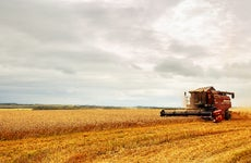 A combine harvest a field of grain