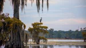 Best homeowners insurance in Louisiana of 2021