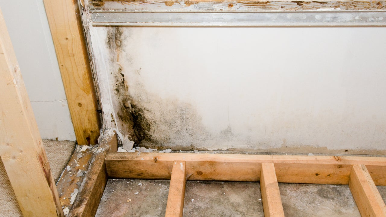 Wall and flooring removed to reveal black mold growing.