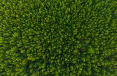 Aerial view of forest from above