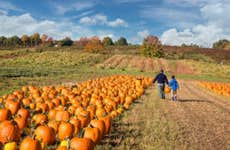 A father and child pick out a pumpkin.
