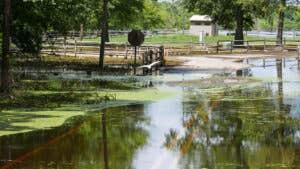 Louisiana Flood Insurance