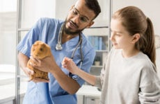 Veterinarian helps young woman with guinea pig