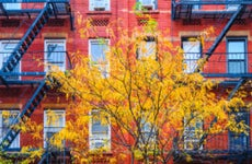 A tree with fall foliage in front of brick low-rise apartment houses.