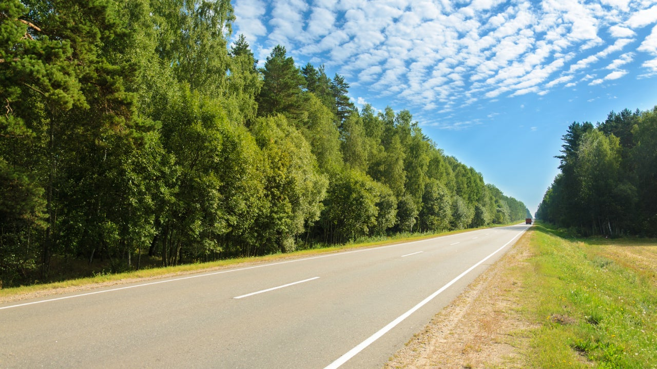 asphalt road through deciduous forest