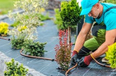 A landscaper installs an irrigation system around plants.