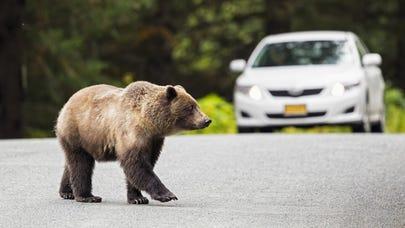 Car insurance for high risk drivers in Alaska