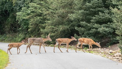 Does liability insurance cover hitting a deer?