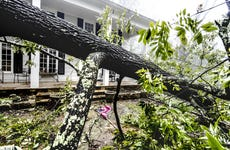 Fallen Tree after storm