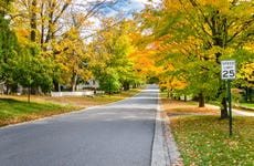 Street Lined with Colourful Autumnal Tree through a Tranquil Residential District